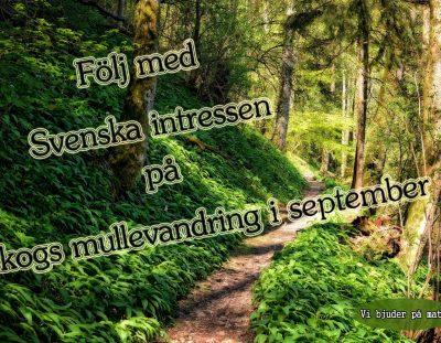 Följ med på skogsvandring