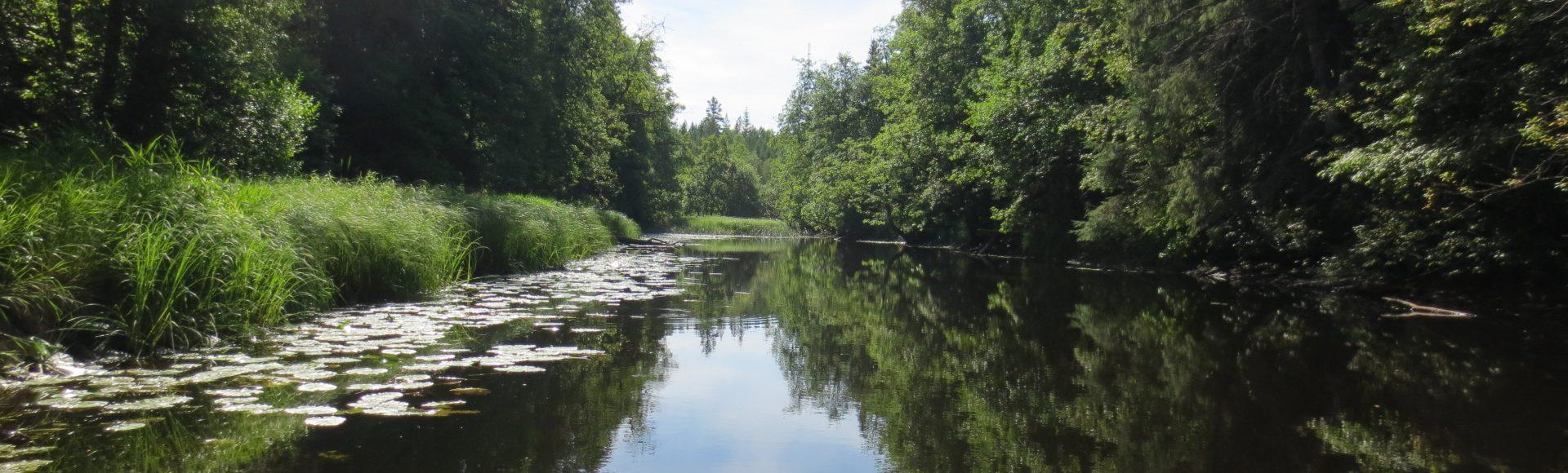Svenska intressen är inte bara en skogsmulleförening – vi paddlar även kanot.